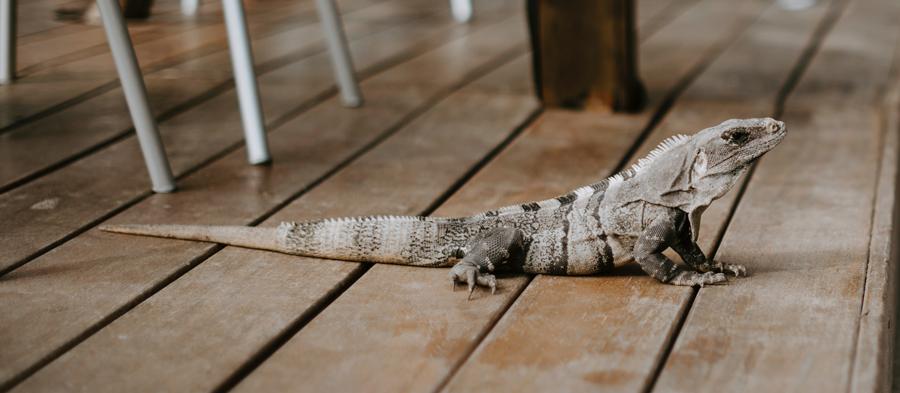 Türkis rechts, Blau links – traumhaftes Yucatan