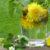 gruenes Detox mit Kräuter