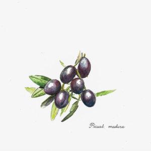Für uns Laien ist das native Olivenöl extra ein reiner, naturbelassener Fruchtsaft, der durch mechanische Verfahren oder durch andere physikalische Verfahren aus der Olivenfrucht (Olea europaea L.) gewonnen wird. Dies ist unter thermischen Bedingungen durchzuführen, die das Öl nicht verändern. Nach der höchsten Autorität des Ölsektors, dem International Olive Council (IOC), der die einzige zwischenstaatliche Organisation der Welt ist, in der die Herstellerländer von Olivenöl und Tafeloliven vertreten sind, ist außer Waschen, Dekantieren, Schleudern und Filtern keine weitere Behandlung erlaubt. Das Öl darf bei der Herstellung also auch nicht mit Kräutern oder anderen Säften wie Zitrone gemischt werden.